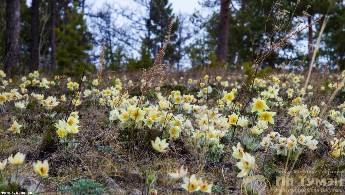картинки природа якутии весна плоды