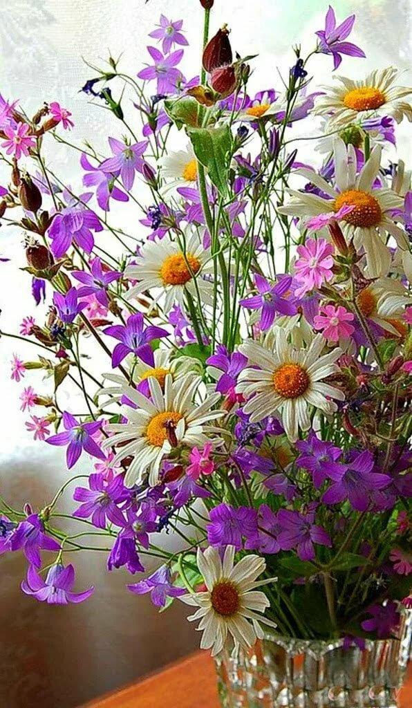 красивые открытки с полевыми цветами что это привлекает