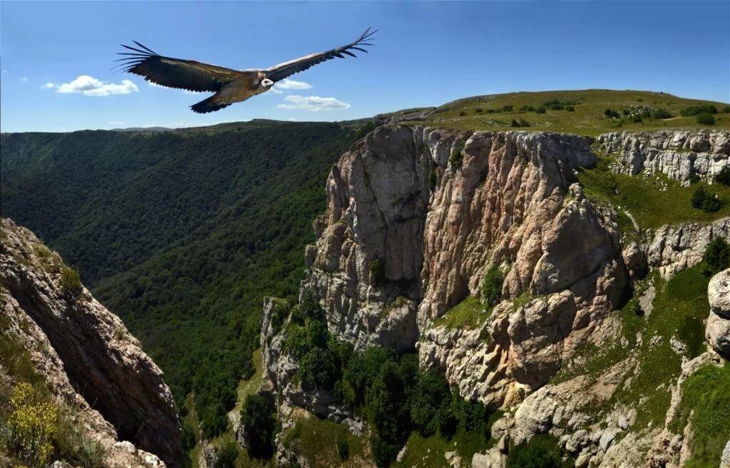 птицы в горах крыма собрал