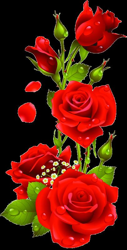 Днем рождения, гугл картинки цветы пнг