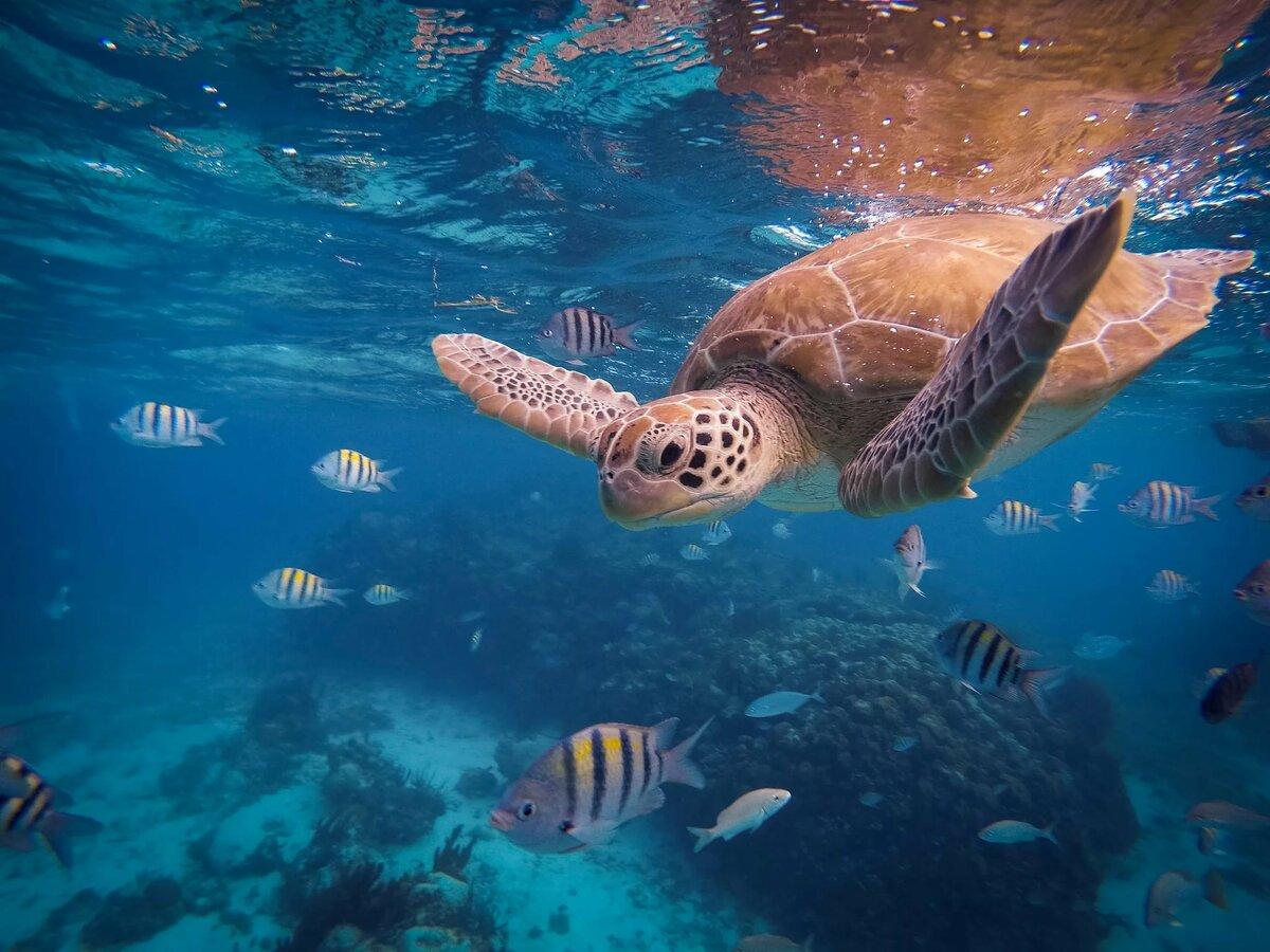 весов картинки как в реальной жизни выглядит океан с рыбами это довольно