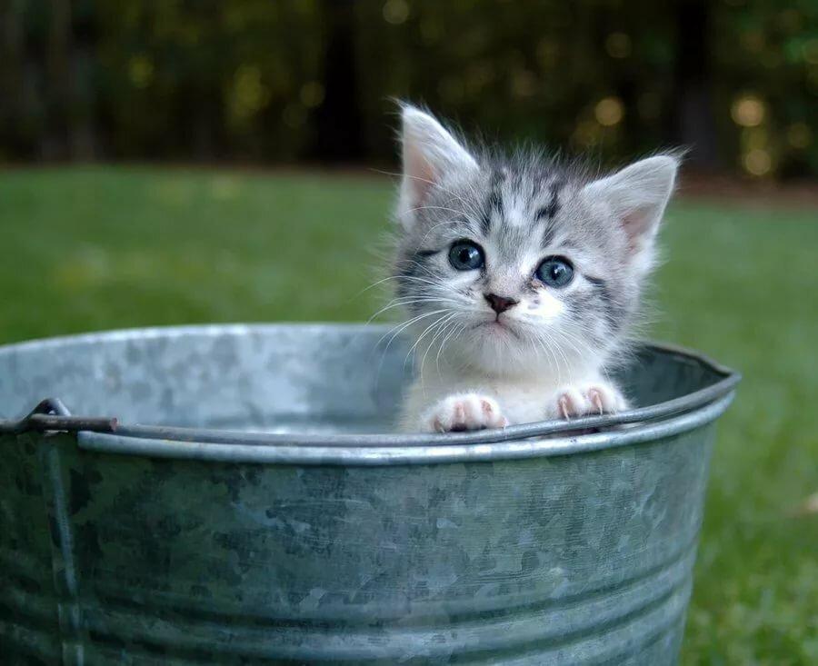 очень котенок в ведре картинка живем так