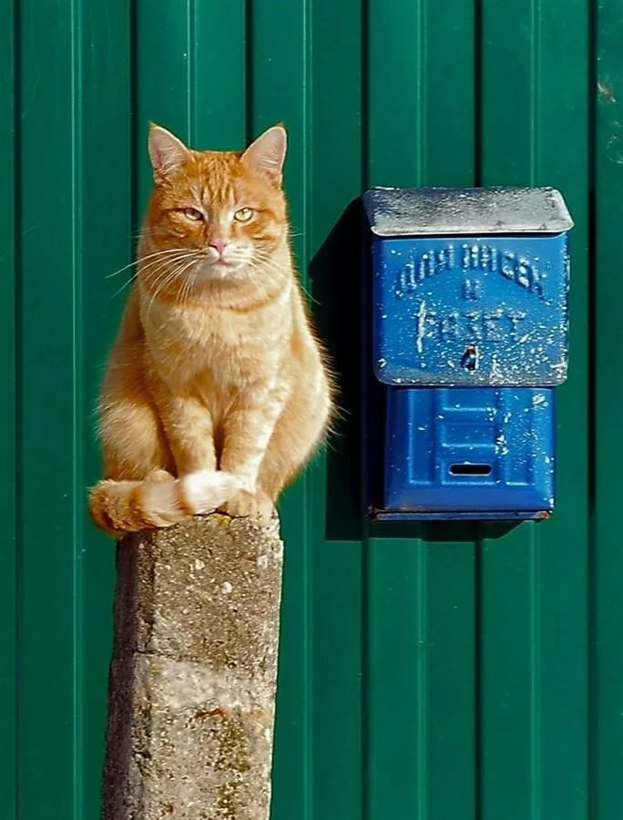 Waiting for the mail. Photographer: Arina- - Pixdaus ahtanluvCATS Orange tabby cats, Red cat и Beautiful cats