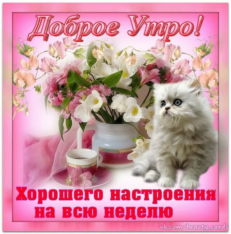 Доброе утро открытка котенок
