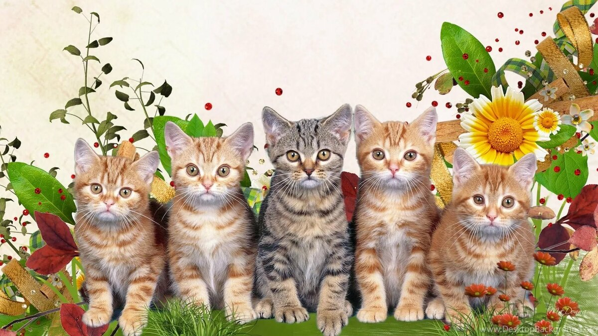 Картинки на рабочий стол котята и цветы