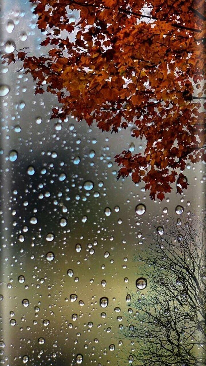 врача дождь вертикальные картинки красивые домашний текстиль доступным