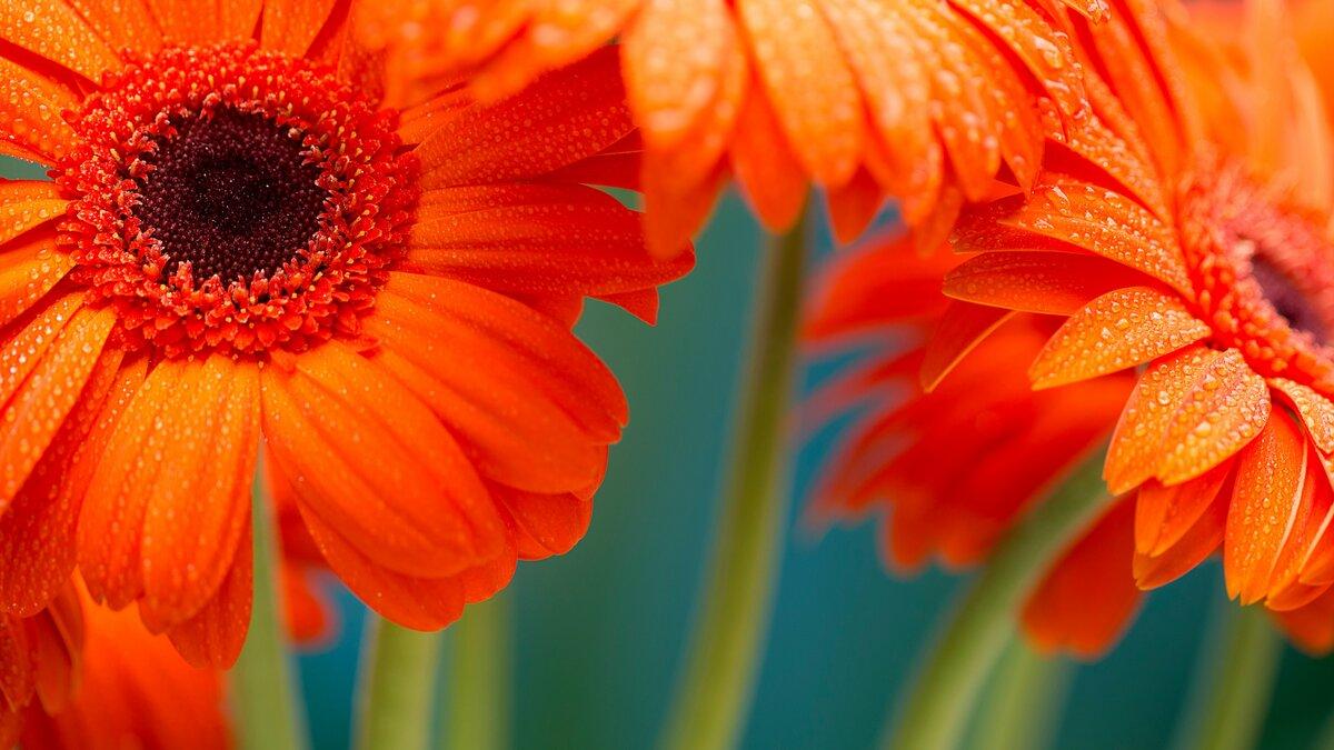 Оранжевые картинки высокого разрешения