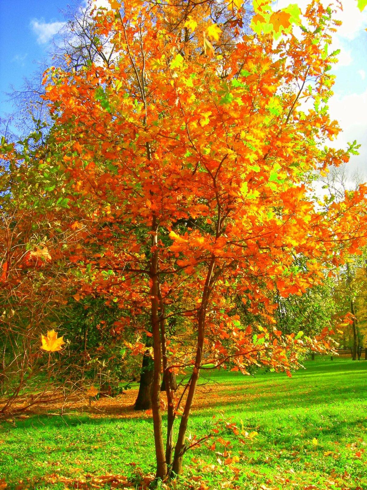 грудная осень вертикальные картинки сентябрь тому моменту стриженов