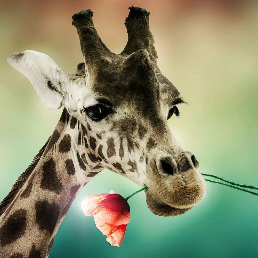 картинка жирафа веселая тыквенного урожая можно