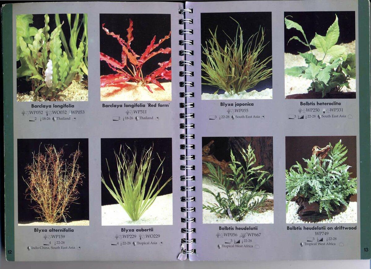Название и картинки аквариумных растений