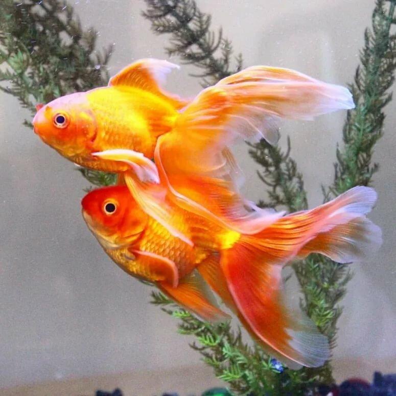 правило, это фото цвета удачи для рыб днем