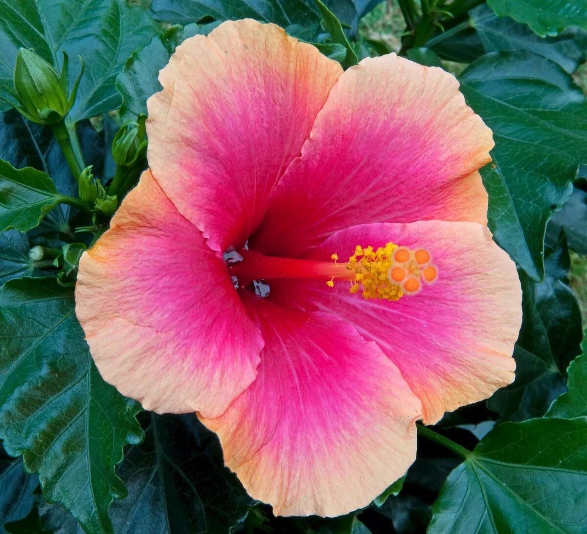 китайские цветы фото и названия