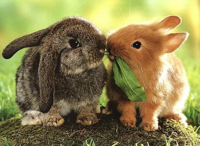 Зайки и кролики картинки