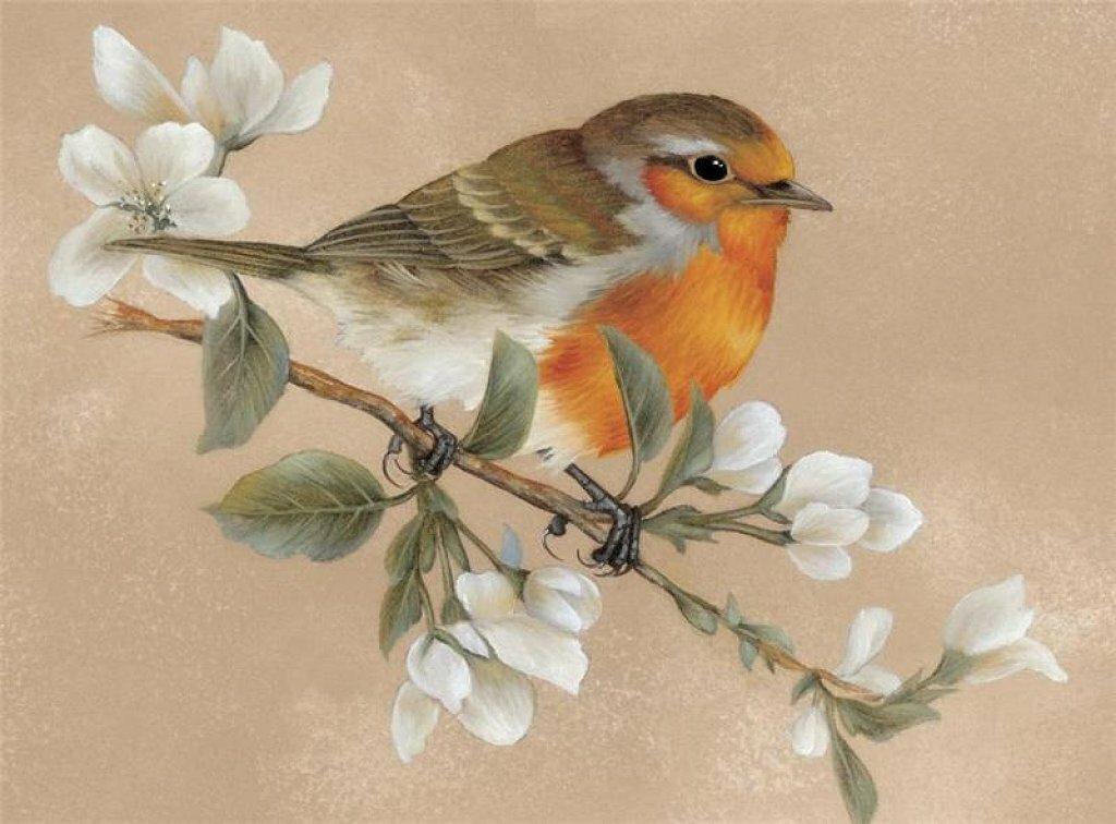 Картинки с нарисованными птичками