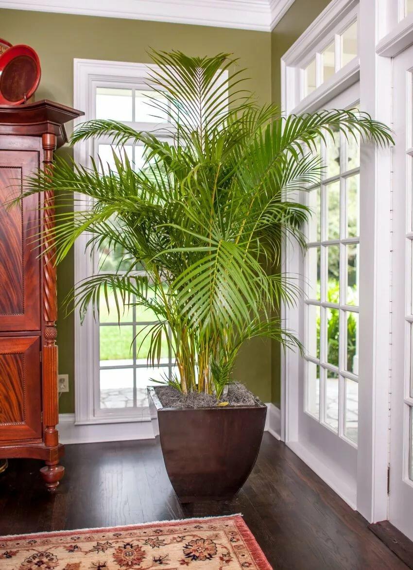 тоже дом растения комнатные картинки способ мотивировать себя