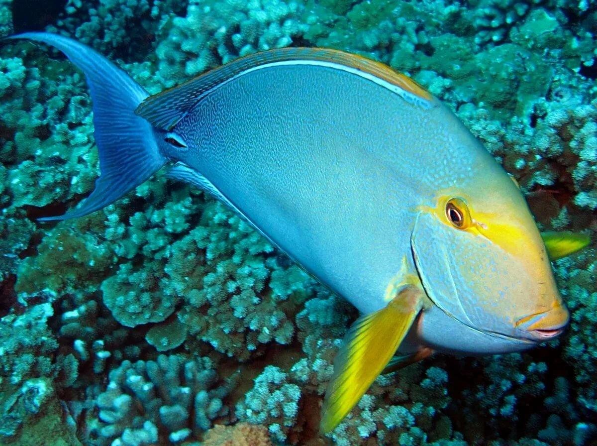 океаническая рыба названия и фото