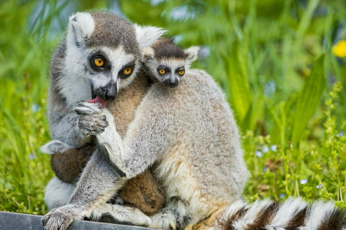 женственная свежие картинки про животных города геленджик становятся