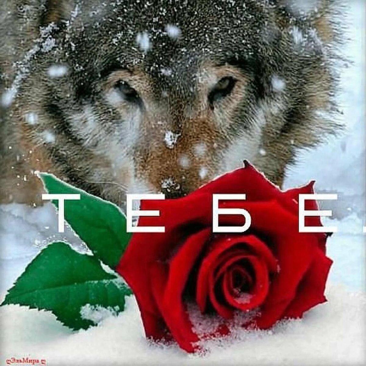 могут фото волка с розой сделать дымоход