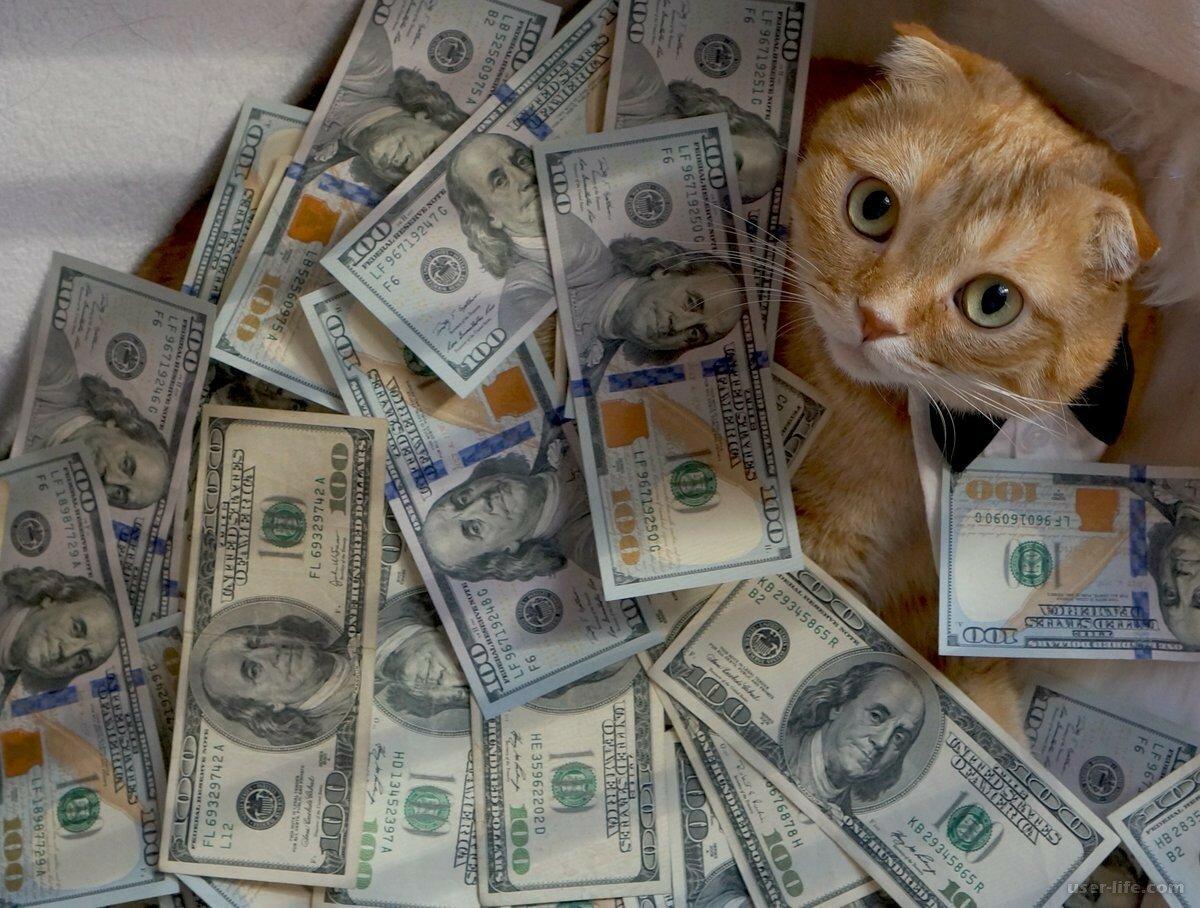 Смешные картинки деньги