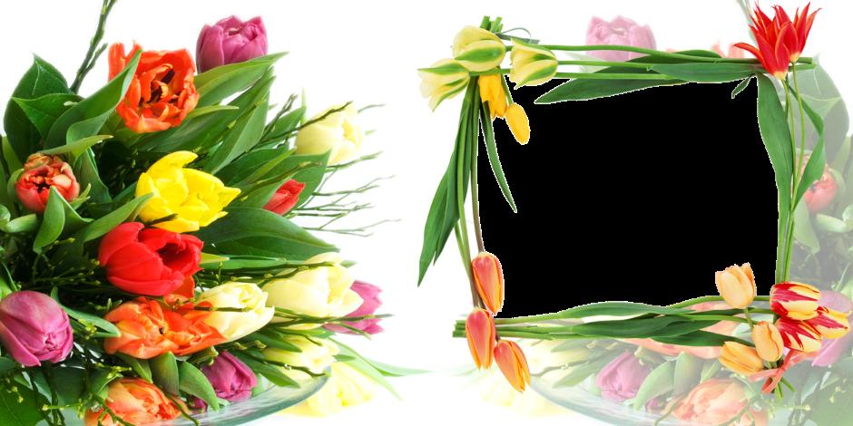 Открытки, тюльпаны шаблоны открытки