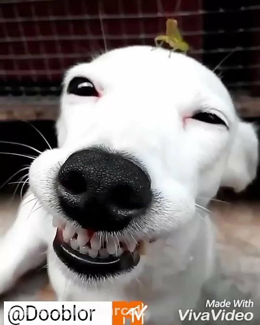 Зимний день, гифки улыбнись смешные