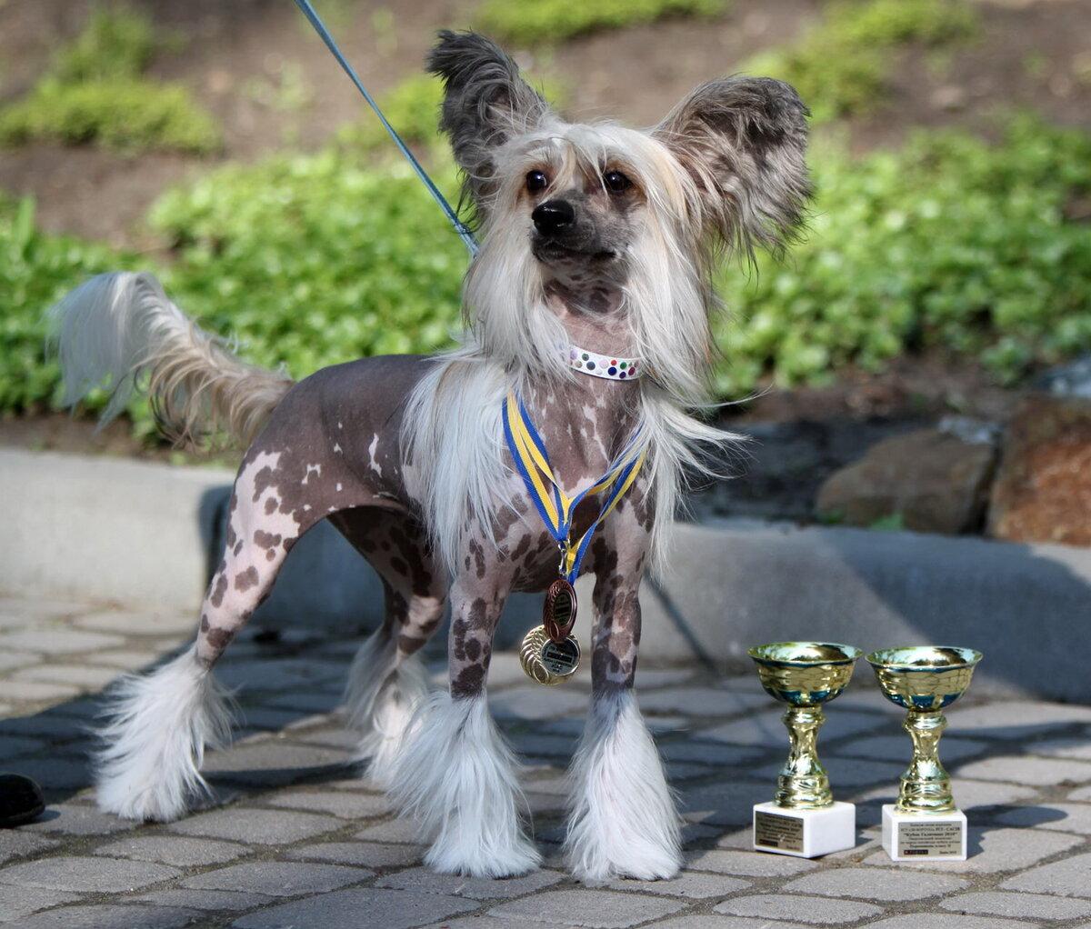этого самые редкие собаки в мире фото с названиями первым сказаниям