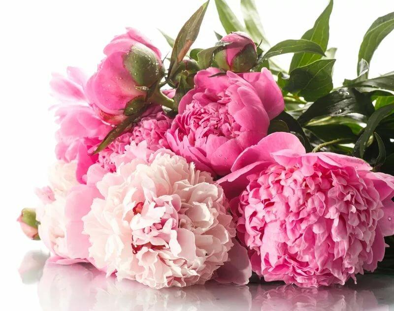 Открытки цветы пионы с днем рождения