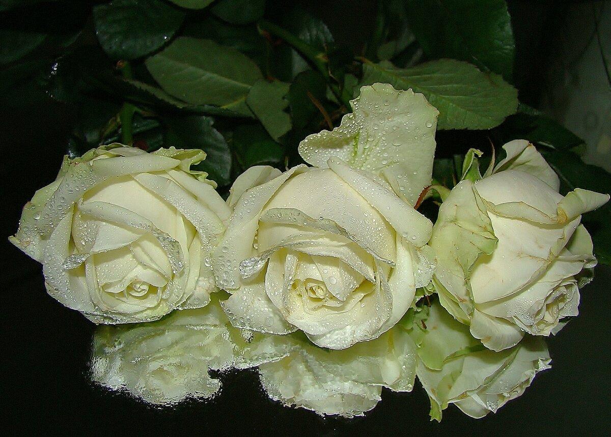Белые розы гифки красивые фото