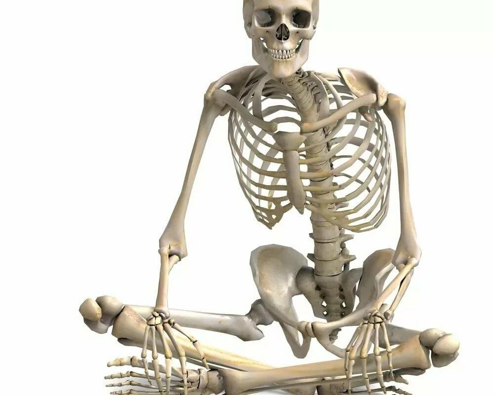 Рождения открытки, прикольные картинки анатомия
