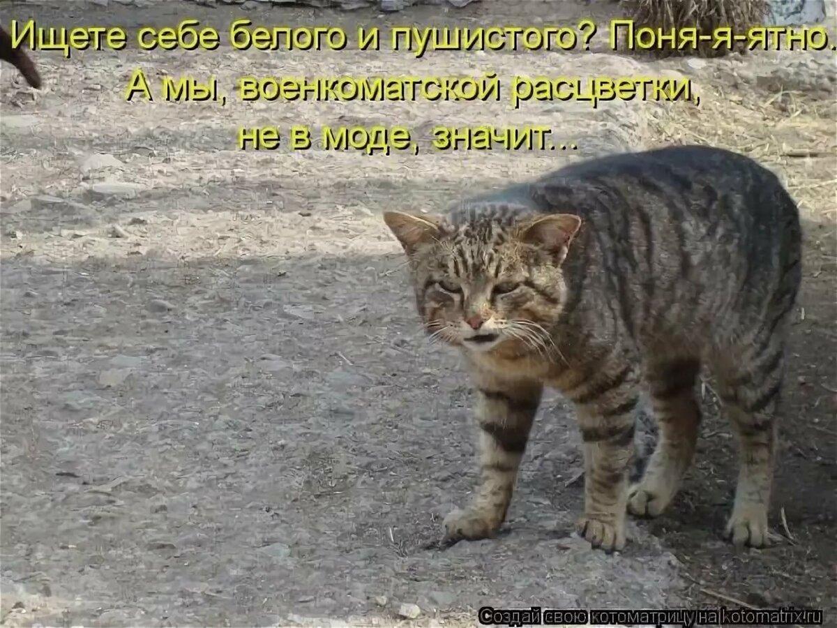 Картинки котов смешные с подписями