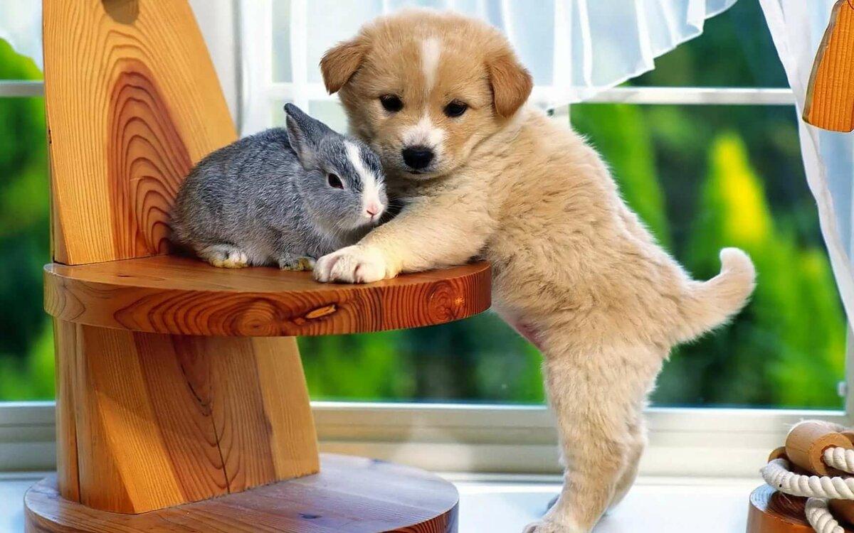 Смешные и милые животные на обои