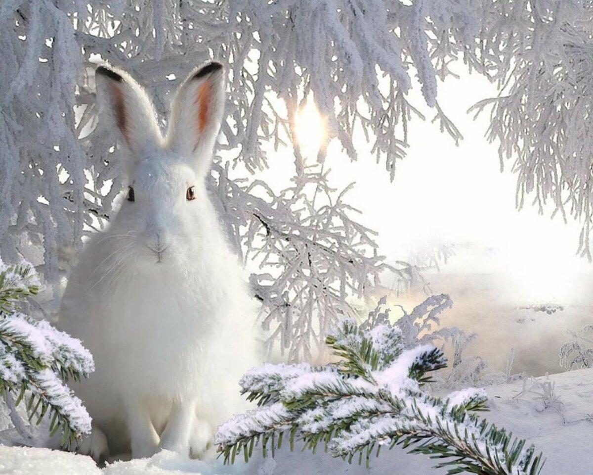 начала красивые картинки зайца зимой это непросто, поскольку