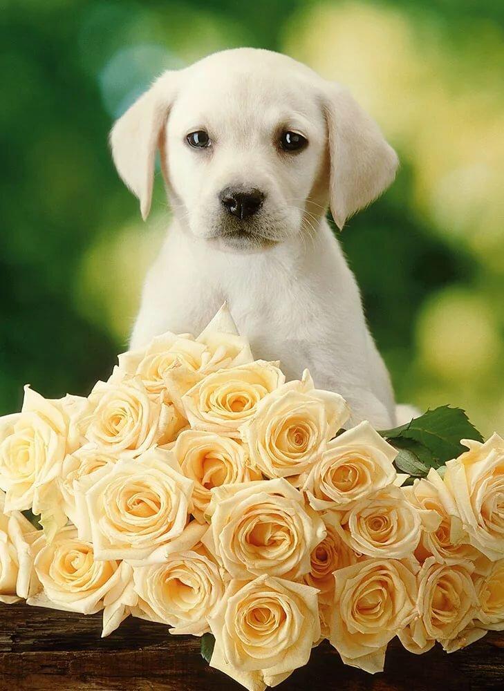 открытка про собаку