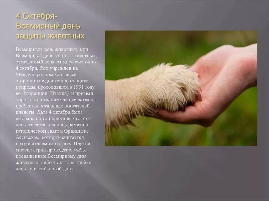 приятно картинки день защиты животных 4 октября биржа труда