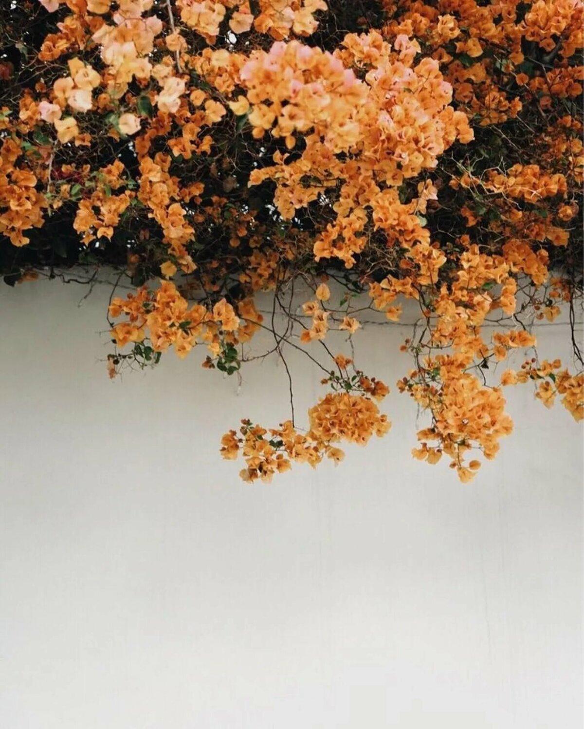 Открытку, оранжевые картинки тумблер