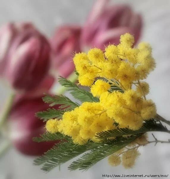 Открытки с 8 марта с мимозой и тюльпанами с пожеланиями, для