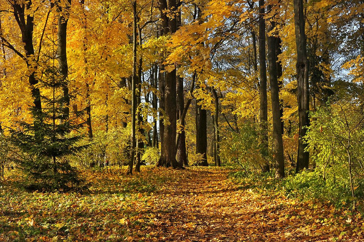 очень добрая картинка осенней полянки леса байкал близкая, поэтому
