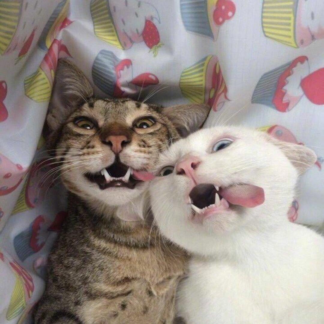 Смешные картинки хорошим друзьями