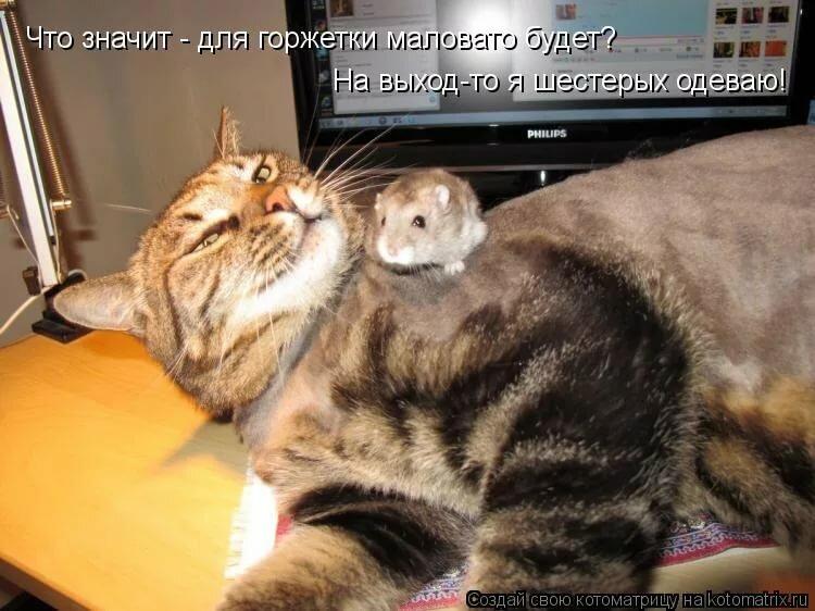 Про, смешные коты фото с надписями новые до слез