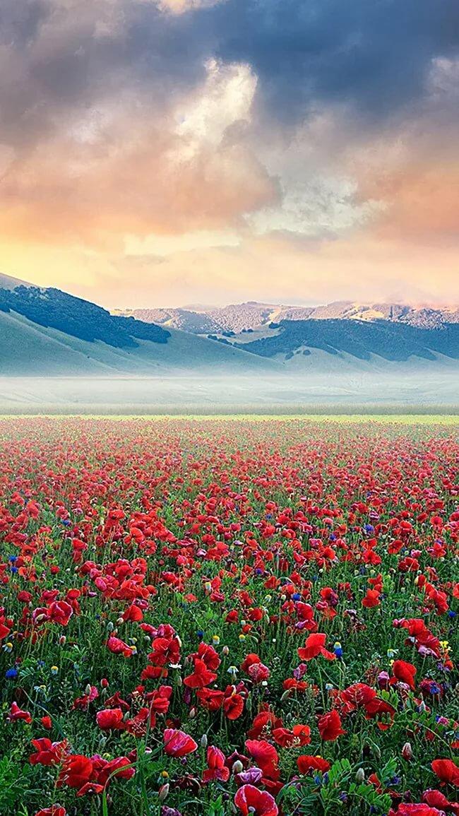 картинка поле цветов и горы подарков уроку