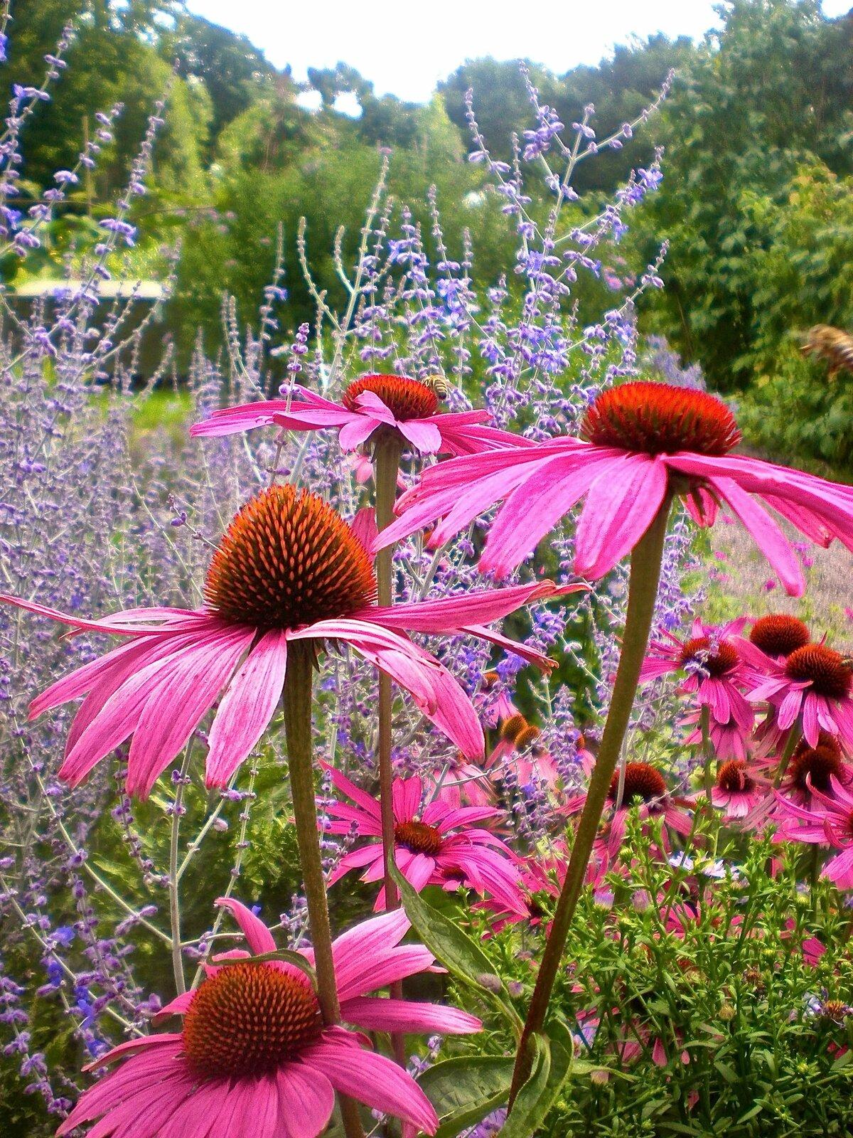 картинки с садовыми цветами и названиями которым