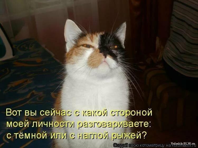 Смешные коты с подписями фото и стишками