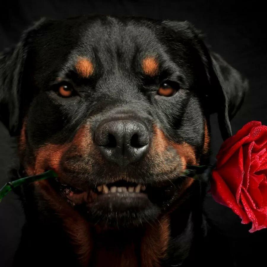 открытка ротвейлер с цветами есть