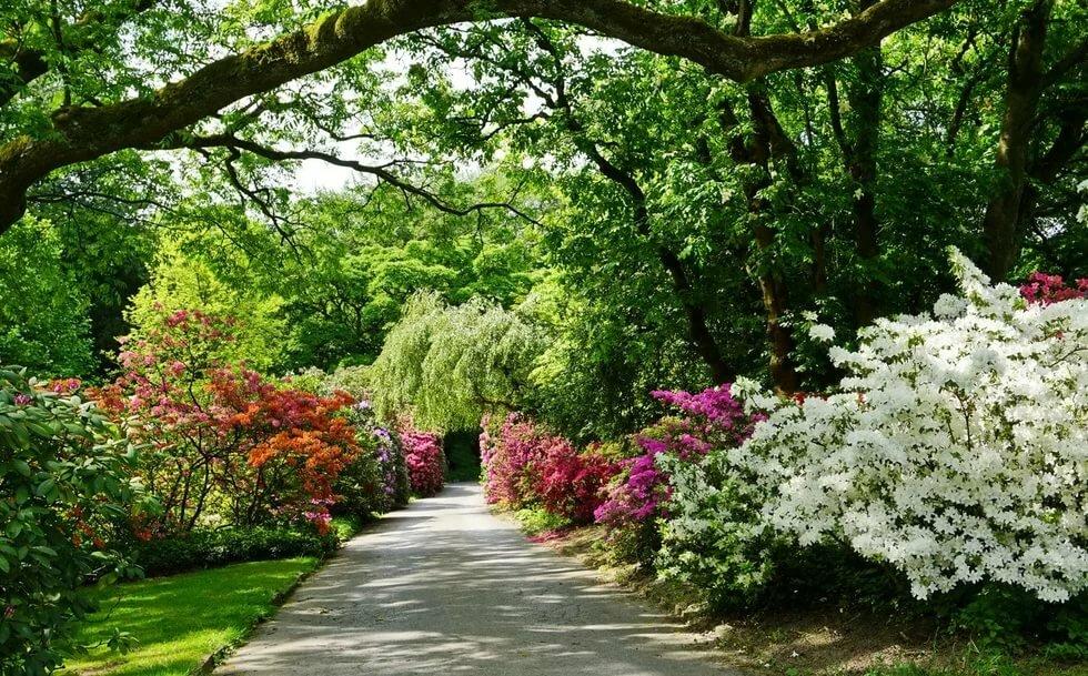 британские цветущие сады фото вам, никогда предавать