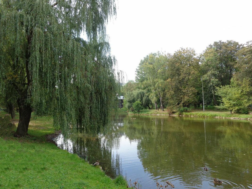 Фото озера верба