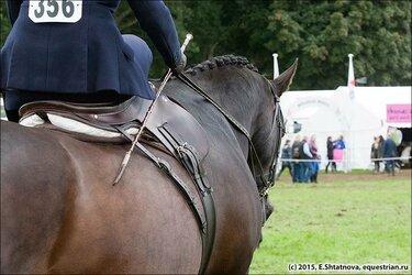 лошадь в амуниции для конного спорта