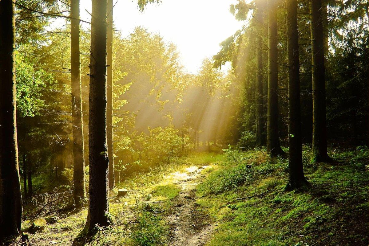 после смерти лучи солнца в лесу картинки и фото цена