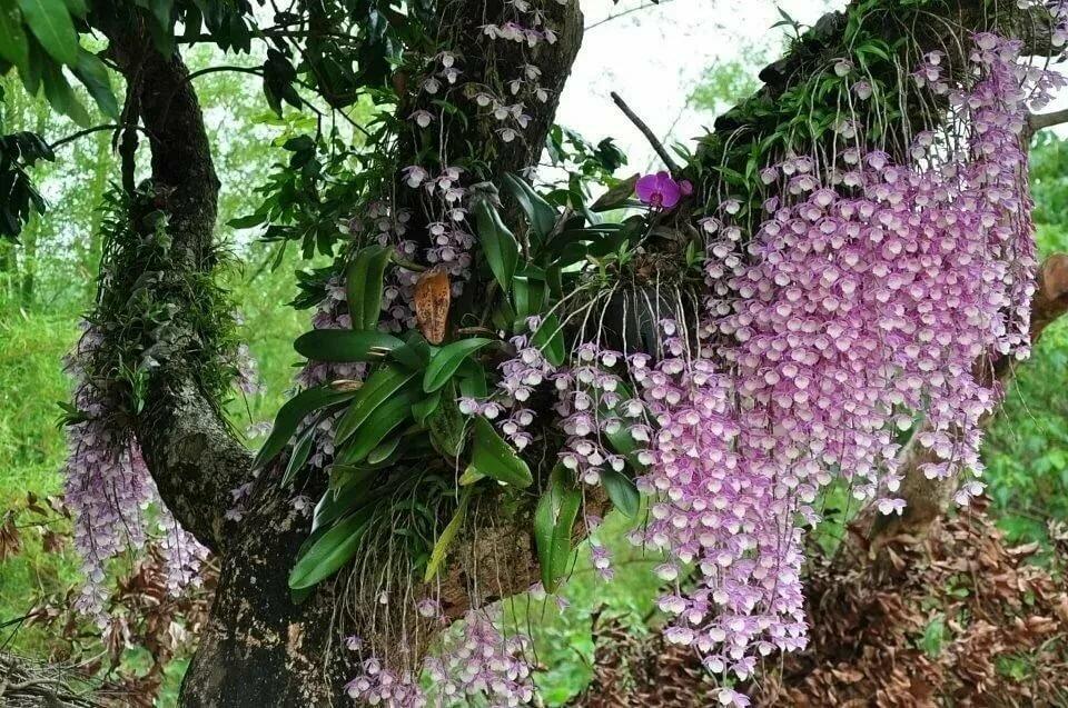 Цветочные рисунки на ногтях орхидеи белые фото таком мероприятии