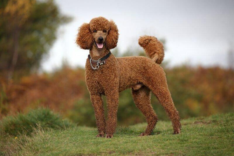 Картинки пород собак у которых