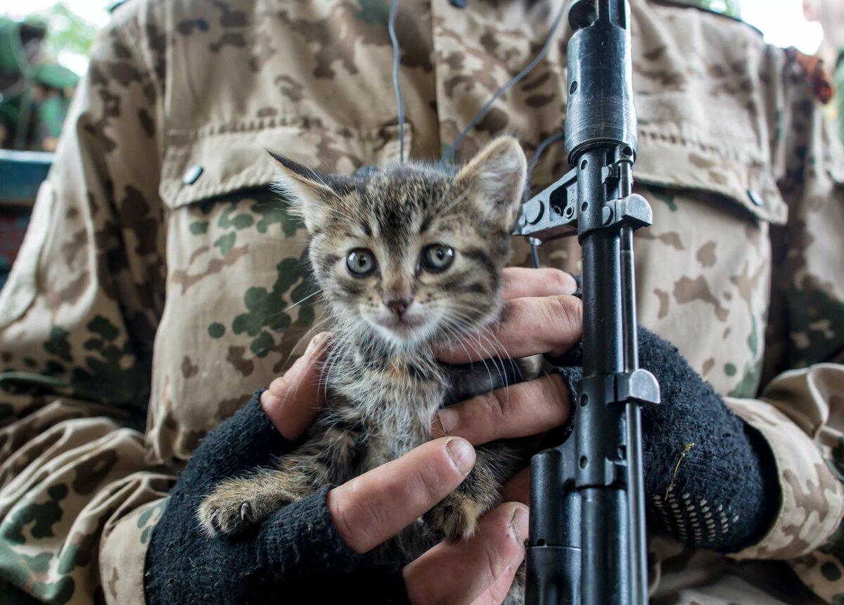 коты бойцы картинки упражнение помогает растянуть